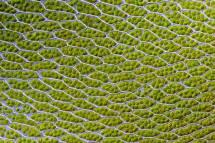 Loại bỏ mùi thối và cặn bẩn (tảo lục)