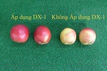 Trang trại Đào áp dụng Sungwon DX-1